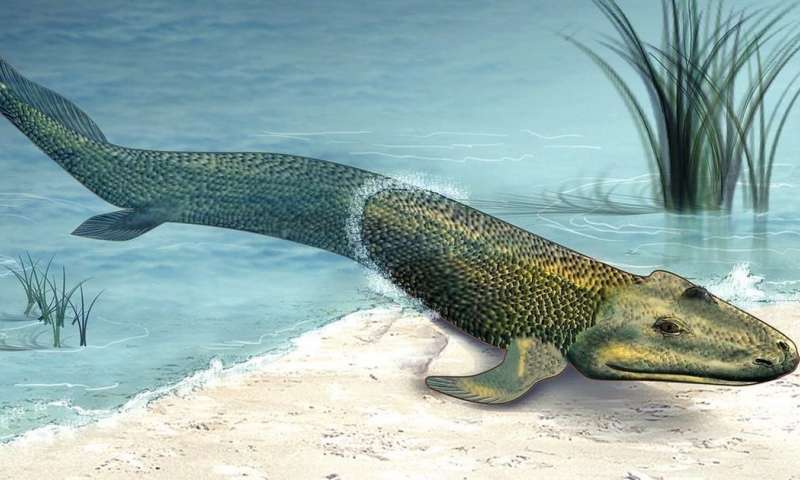 Scientists Discover Fossils of Ancient Tetrapod that May have Never Actually Left Water
